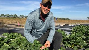 Ryan McGrath examines a strawberry plant at the Gulf Coast Research and Education Center in Balm.