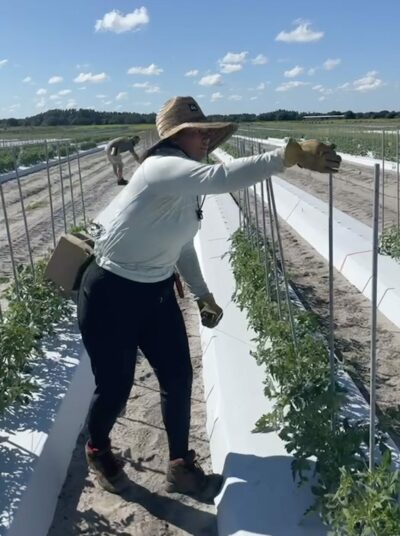 Samantha tying tomato plants during her horticulture lab.